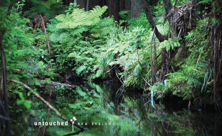 project-untouched-nz